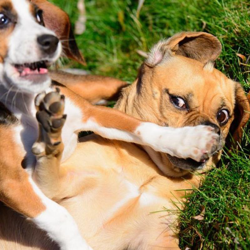 개가 헐렁한 약을 먹어야하는 약은 무엇입니까?
