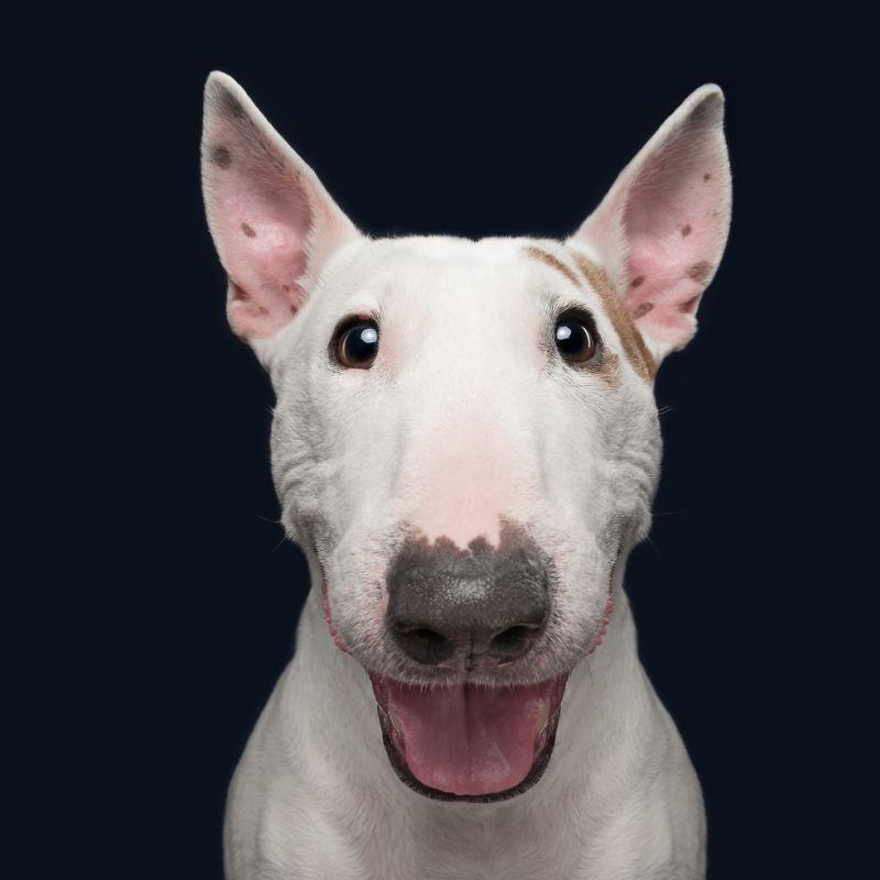 개가 듣지 않으면 어떡하지? 개가 지시에 따라 어떻게 받습니까?